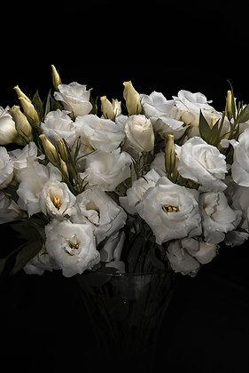 Flores Brancas II