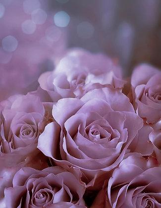 Pink Roses Shine