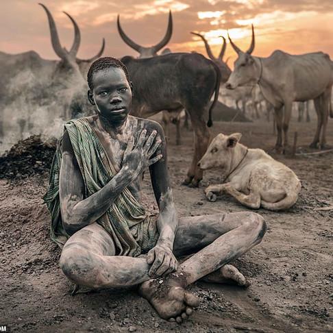 A tribo que cultua vacas e as trata como iguais.