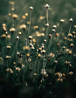 Lovely field of flowers