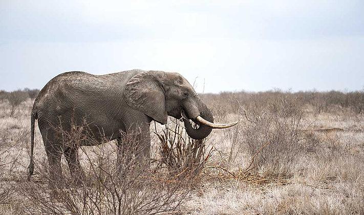 Elefante Alegre