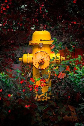 Hidrante Amarelo