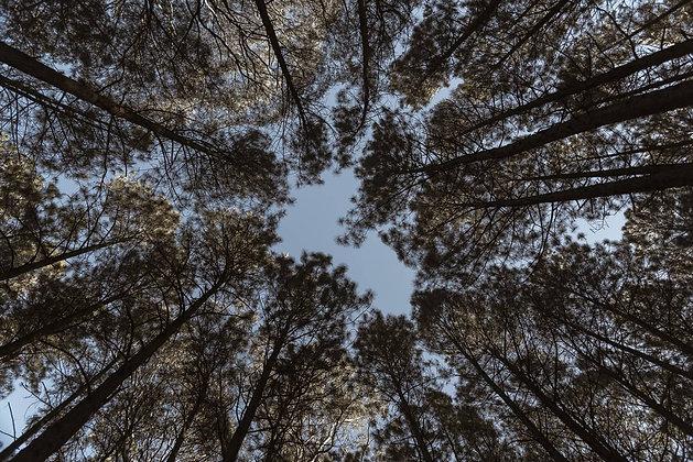 Céu na natureza