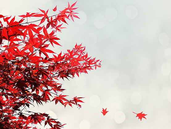 Leaves Red
