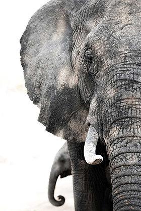 Meio elefante