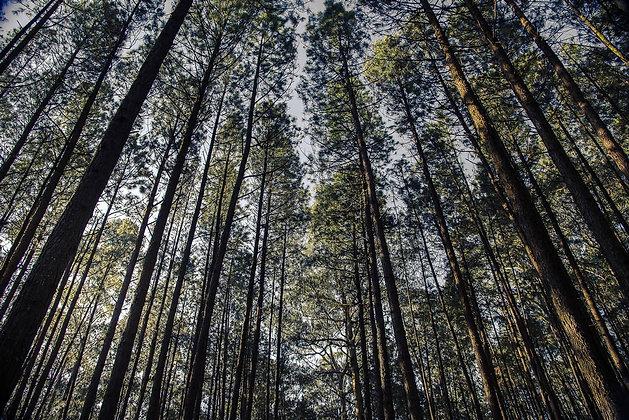 Árvores ao entardecer 2