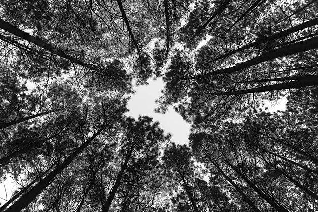 Céu na natureza PB