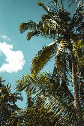 Palm Madness