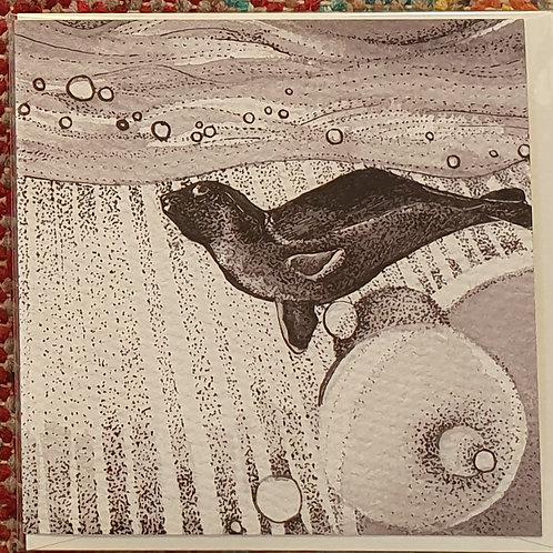 seal sun blank greetings card (15cm x 15cm)