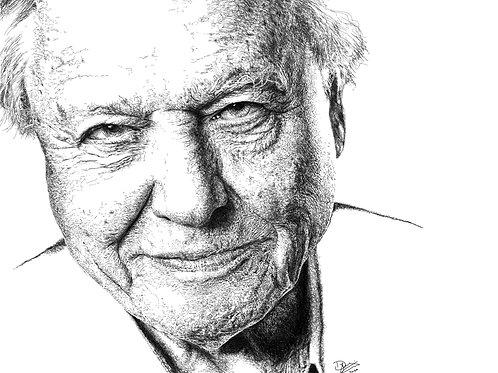 David Attenborough print 25 cm by 25 cm