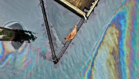 oil seal.jpg