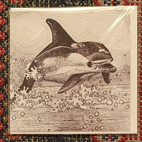 Dolphin blank greetings card (15cm x 15cm)