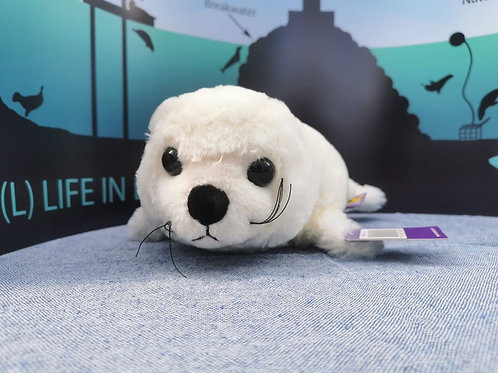 Small white seal pup