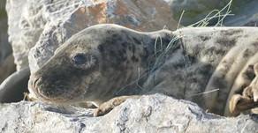 Seals in lockdown