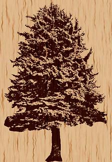 Baum für Kopf.png