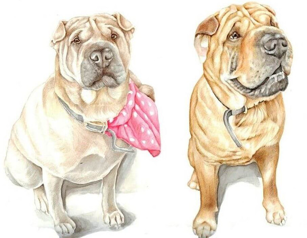colour pencil realistic drawing of family pet dog siblings with neckercheif | picky pencil pet portrait artist
