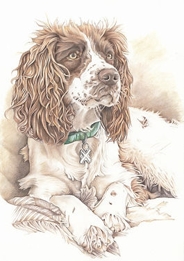 spaniel pencil pet portrait from photo