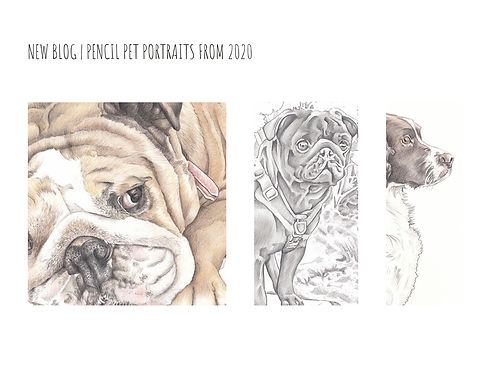 new blog realistic pet portraits from 2020