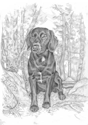 Graphite pencil portrait of a labrador birthday gift | picky pencil pet portraits artist