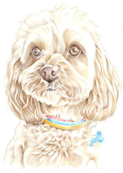 colour pencil realistic Lhasa apso toy dog portrait | picky pencil pet portrait commission artist