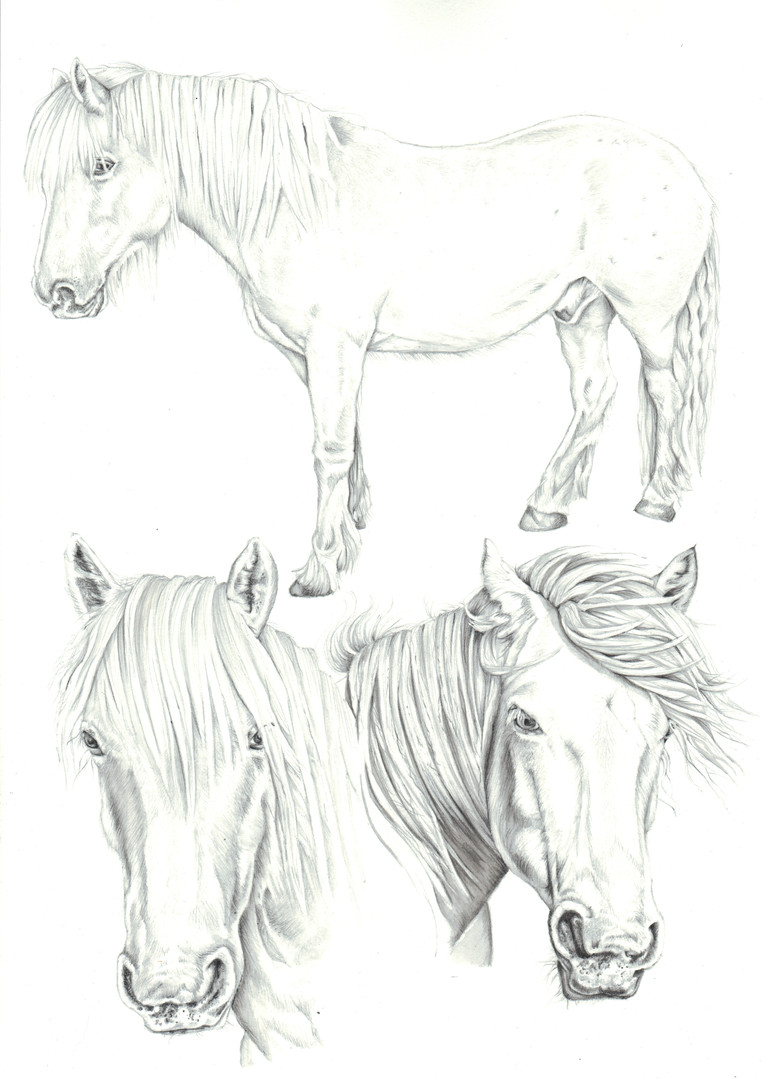 Collage horse pencil realistic illustration | picky pencil
