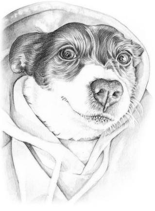 Graphite photo realistic jack russell in a jumper portrait commission | picky pencil pet portrait artist