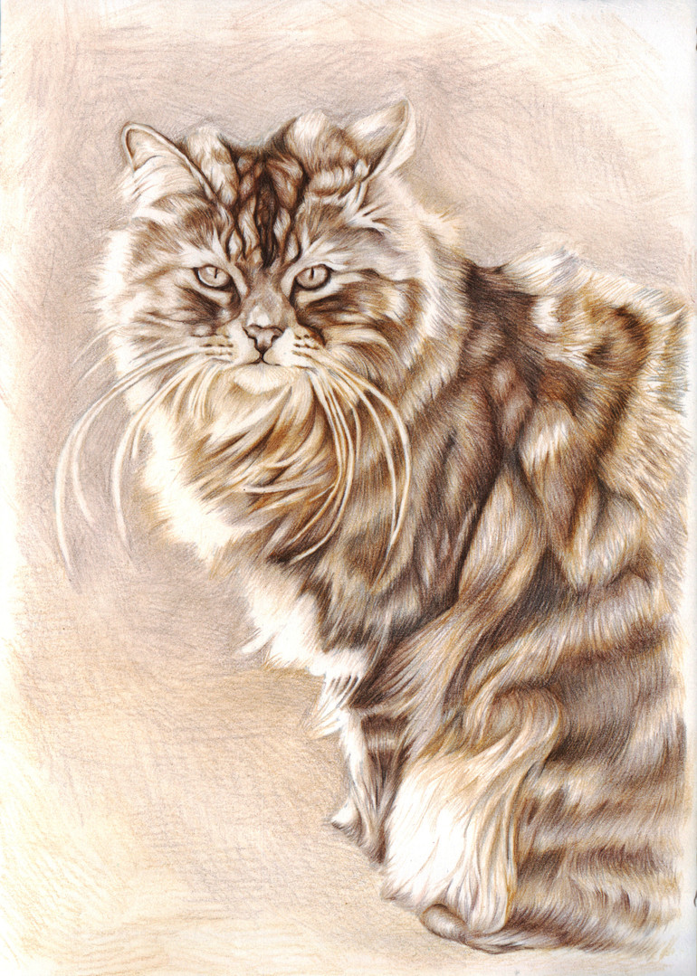 Cat colour pencil drawing illustration | Picky Pencil