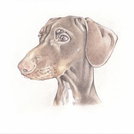 Realistic pet portrait drawing mini headshot