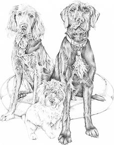 group montage of family dogs in graphite   picky pencil pet portraits