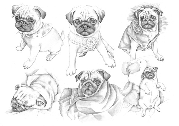 Black and white pencil Pug drawing collage birthday gift | picky pencil pet portrait artist