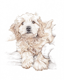 small size A5 pencil dog portrait for one dog full body or head and shoulder | aberdeen artist
