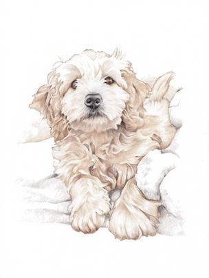 Tonal photorealistic pet portrait | picky pencil artist