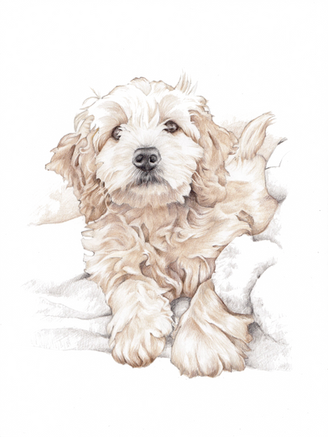 Tonal photorealistic pet portrait   picky pencil artist
