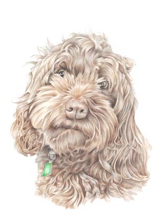 Tonal colour head and shoulder realistic pet portrait art   picky pencil artist
