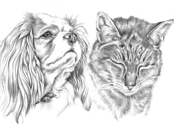 Graphite Line realistic drawing of family king charles spaniel a tabby cat | picky pencil pet portrait artist
