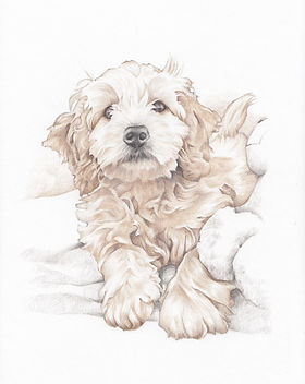 colour pencil pet portrait picky pencil illustration