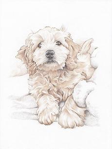 sepia tone realistic pencil pet drawing   picky pencil pet portraits