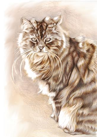 Sepia tonal photo realistic pencil cat portrait   picky pencil artist