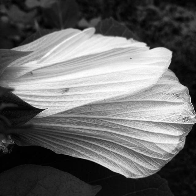 Petals before Fall