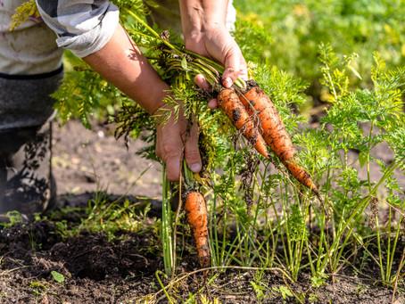 Hvordan kan biokull hjelpe oss å løse fremtidens miljøproblemer?