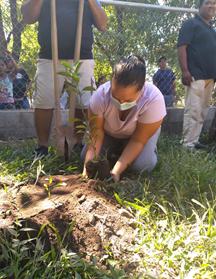 Reforestación en zonas verdes de la comunidad Hoja de Sal