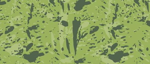 Phylodendron Paraíso Verde