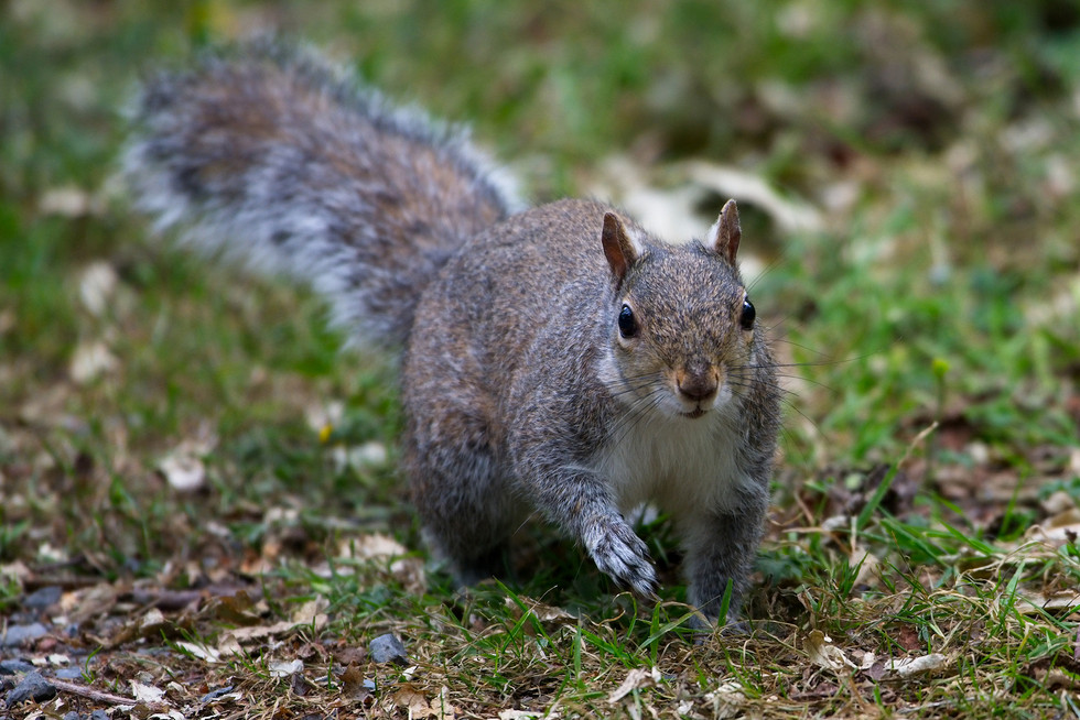 'Squirrel' by Joe Beattie ( 10 marks )