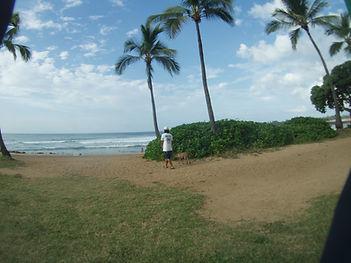 ハワイ 夏限定 ダイビング ノースショア ハワイ