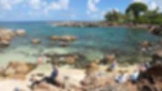 ハワイ|夏限定|ダイビング|ノースショア|シャークスコーブ