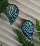 Clip Earring - Hand Carved Paua Shell (2072/cBX)