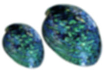 Rei Jewellery - Iridescent colour of Paua shell