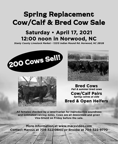 Spring Replacement cow sale.jpg