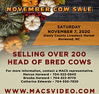november cow sale square.jpg