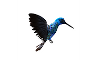 oiseau_edited.png